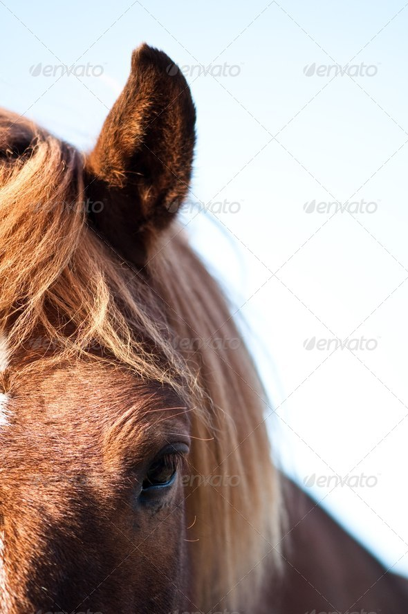the soul of a horse - Stock Photo - Images