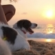 Woman Pets Her Dog Sitting By Sea At Sunrise On Beach - VideoHive Item for Sale