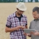 Two Farmers Working With The Tablet On The Field Of Wheat - VideoHive Item for Sale