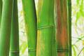 Abstract Zen Bamboo - PhotoDune Item for Sale
