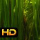 Underwater Sea Grass - VideoHive Item for Sale