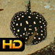 Black Diamond Ray in Tropical Bay - VideoHive Item for Sale