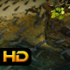Fishes in Tropical Bay - VideoHive Item for Sale