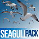 Seagull Pack 1 - VideoHive Item for Sale