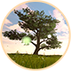 Tree On The Green Field - 2 Pack - VideoHive Item for Sale