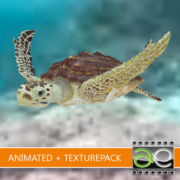 Animated Loggerhead sea turtle - 3DOcean Item for Sale