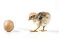 Broken Egg On Chicken - PhotoDune Item for Sale