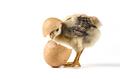 Egg Is Broken - PhotoDune Item for Sale