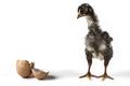 The Broken Egg - PhotoDune Item for Sale