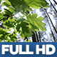 Natural Forest 3-pack - VideoHive Item for Sale