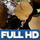Wood Industry 1 - VideoHive Item for Sale