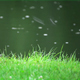 The View of a Rain on the Pond from the Grassy Bank  - VideoHive Item for Sale