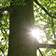 Sunbeams Tree - VideoHive Item for Sale