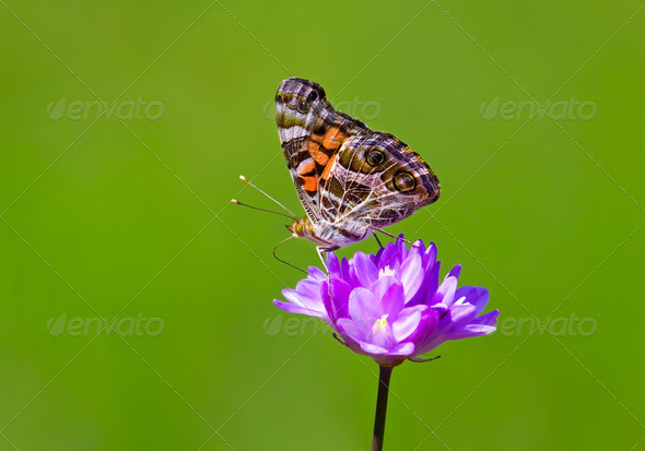 Butterfly on Colorful Flower - Stock Photo - Images