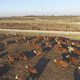 Aerial Feedlot  Herd of Cattle - VideoHive Item for Sale
