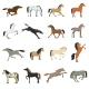 Horse Breeds Pictures Icons Set