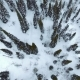 Aerial: Winter Trees - VideoHive Item for Sale
