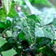 Water Drops on the Plant - VideoHive Item for Sale