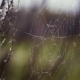Spider Web In Swamp - VideoHive Item for Sale