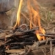 Flaming Bonfire With Small Twigs. - VideoHive Item for Sale