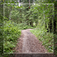 Forest - VideoHive Item for Sale