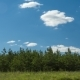 Clouds Moving Over The Forest Pine Spruce Sunny Day Cleaning Agriculture Farmers Cleaning - VideoHive Item for Sale