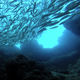 School Of Fish - VideoHive Item for Sale
