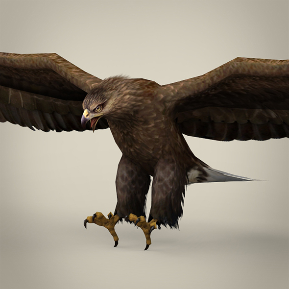 Game Ready Realistic Eagle - 3DOcean Item for Sale