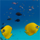 Underwater Colorful Tropical Fish Butterflyfish - VideoHive Item for Sale