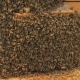 Swarm of Bees on a Bee Box at a Hawaii Bee Farm - VideoHive Item for Sale