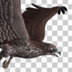 Black Raven - Flying Cycle - Top Side - 30