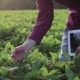 Young Farmer Checks For The Harvest On The Field With The Tablet. - VideoHive Item for Sale