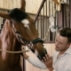 Young Man Petting a Horse On The Muzzle - VideoHive Item for Sale
