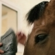 : Man Combing a Muzzle Horse - VideoHive Item for Sale