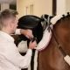 Man Binds a Saddle To The Horse - VideoHive Item for Sale