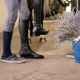 The Guy Wears Riding Boots - VideoHive Item for Sale