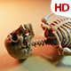 Human Skeleton 0185 - VideoHive Item for Sale