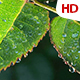 Green Leaf 0492 - VideoHive Item for Sale