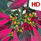 Flower In Nature 0486 - VideoHive Item for Sale