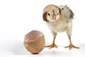 Brocken Egg Shell - PhotoDune Item for Sale