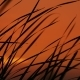 The Reeds On Sunset Background - VideoHive Item for Sale
