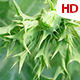 Green Leaf - VideoHive Item for Sale