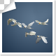 Group Of Flying Birds - VideoHive Item for Sale