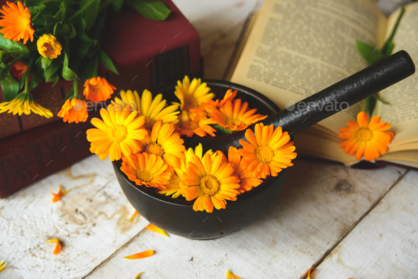 bouquet of calendula - Stock Photo - Images