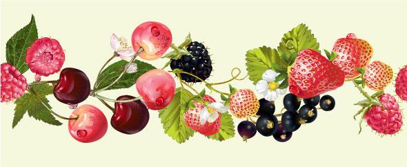 Berry horizontal border
