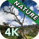 Little Tree in the Wilderness - VideoHive Item for Sale