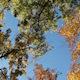 Autumn Trees Against Blue Sky Light Breeze