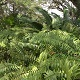 Fern Bushes - VideoHive Item for Sale