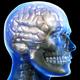 Brain Skull Head - VideoHive Item for Sale