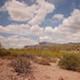 Arizona Desert Shrubs - VideoHive Item for Sale